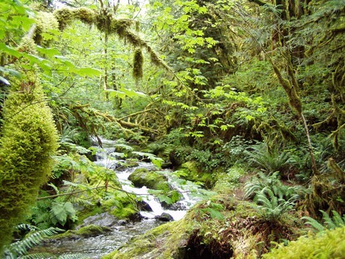 Forest river - 6024465152