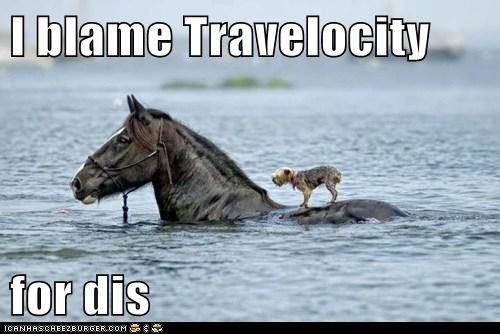 bad trip,blame,dogs,horse,swimming,Travel,travelocity,water