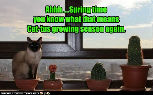 Ahhh.....Spring time you know what that means Cat-tus growing season again.