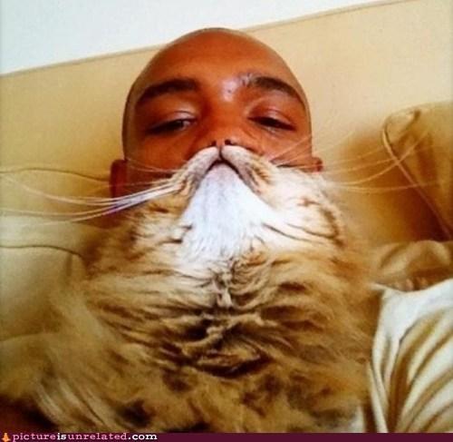 beard cat wtf - 6026048000
