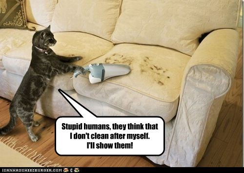 Stupid humans, they think that I don't clean after myself. I'll show them!