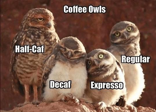 Memes animal memes animals - 6028037