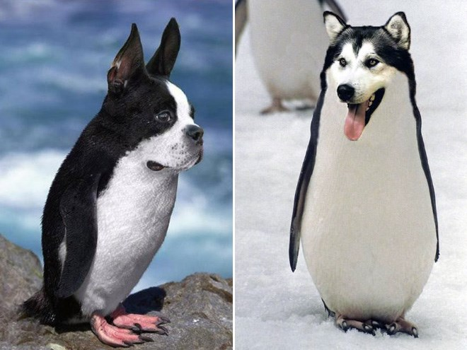 dogs photoshopped as penguins