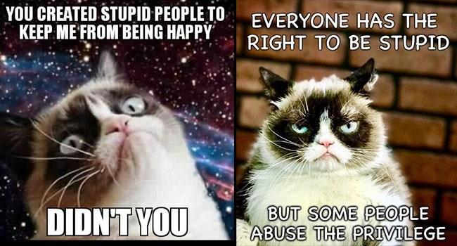 grumpy cat memes about stupid people