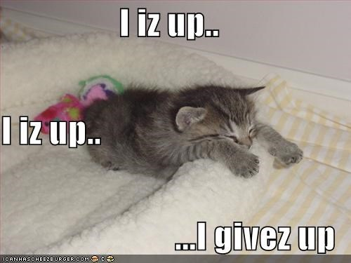gray kitten lolcats lolkittehs sleeping - 602903808
