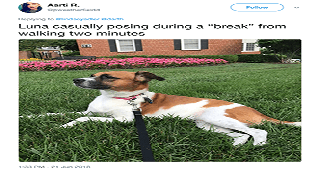 funny dogs posing on twitter