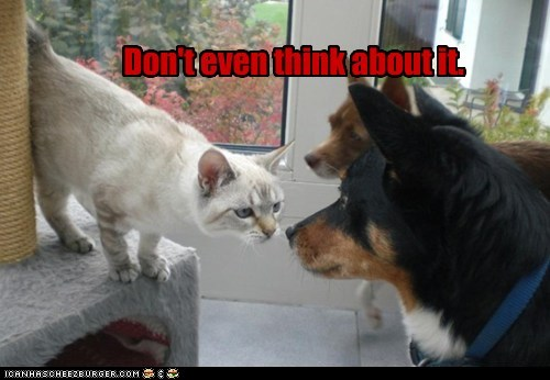 about bad idea cat confrontation do not want dogs dont it territory think warning - 6029941760