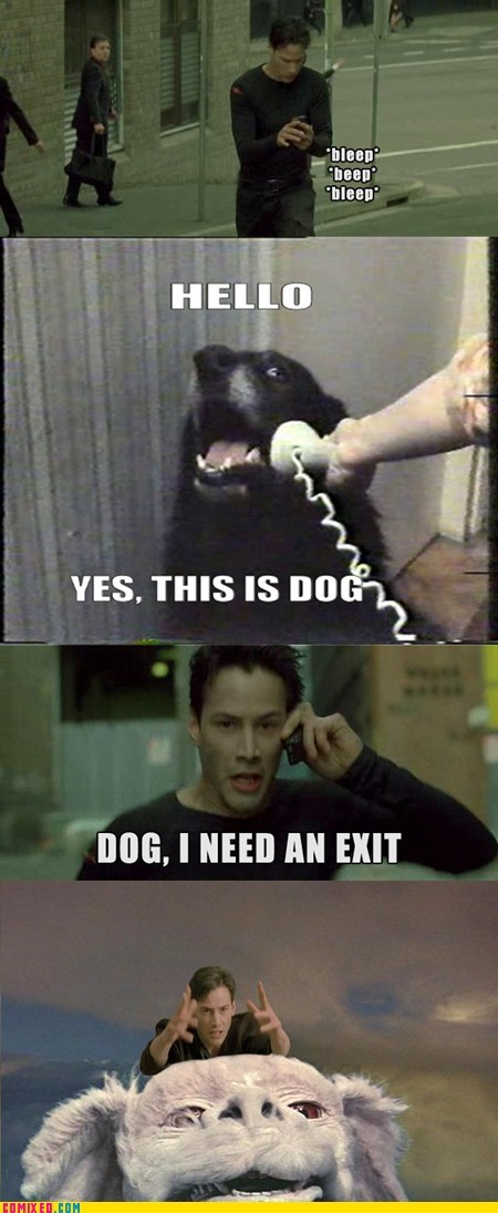 best of week,falcor,From the Movies,matrix,this is dog