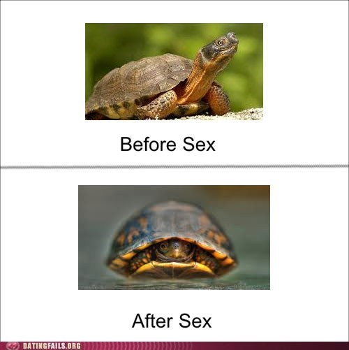after sex,before sex,sexual metaphors,turtles