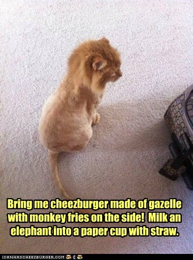 Cheezburger Image 6030407936