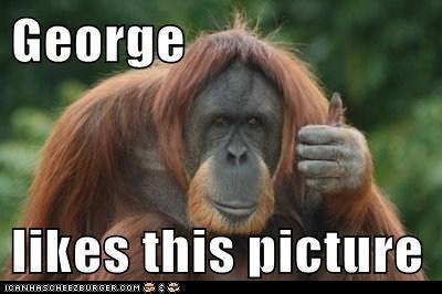 Cheezburger Image 6030621696