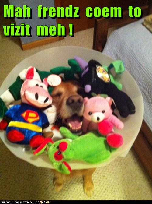 best of the week,cone,dogs,i has a hotdog,toys,what breed