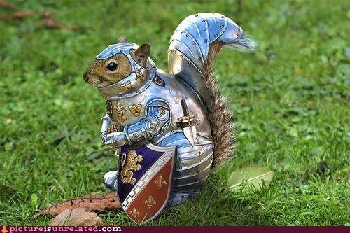 armor,best of week,knight,sir,squirrel,wtf