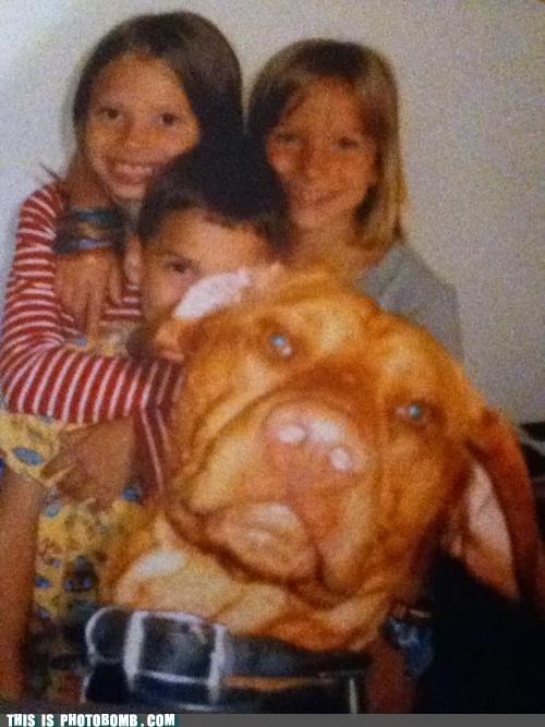 animal Animal Bomb dogs family photo - 6031266816