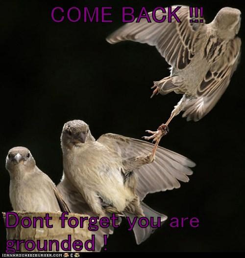 come back,grounded,leg,parents,pull,sparrow