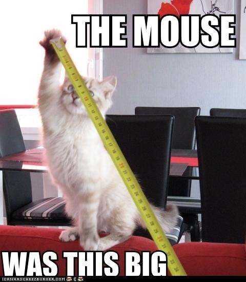 best of the week big caption Cats Hall of Fame huge lies mice mouse tape measure this big - 6031300608