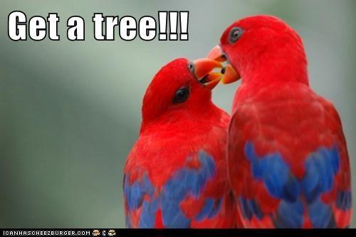 affection birds get a room kissing love parakeet PDA tree - 6031359488