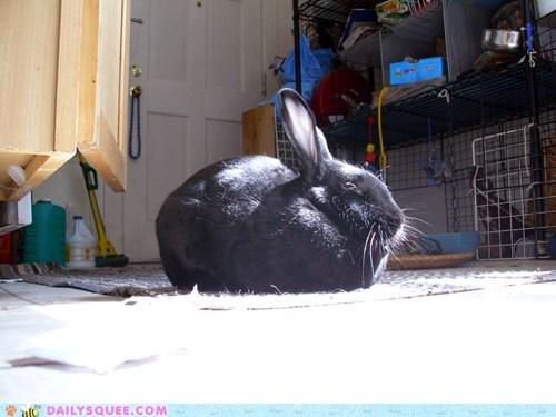 bunny nap reader squees sun - 6031405568