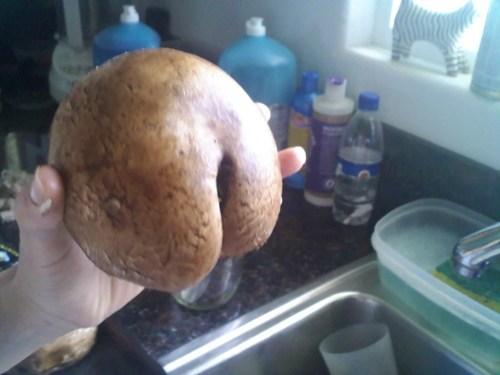 butt,cheeks,mushroom