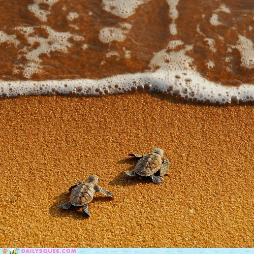 baby beach hatchlings journey ocean sand turtles water