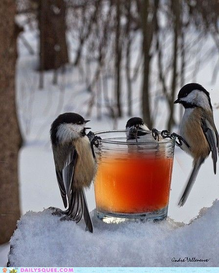 birds,chickadees,drinks,glass,glasses,gossip,juice,snack,snow,squee