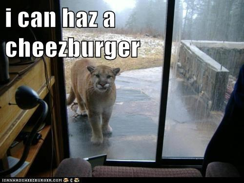 Cheezburger Image 6031720704