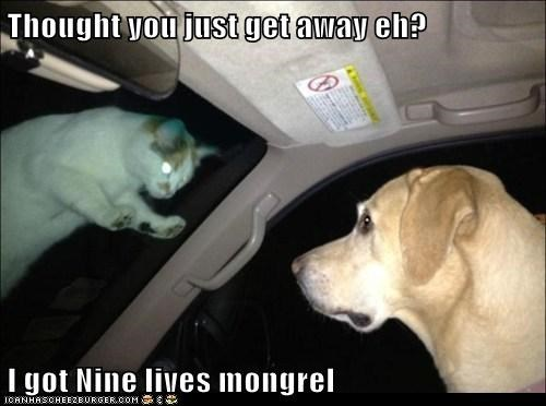car cat creepy dogs following lives nine nine lives revenge