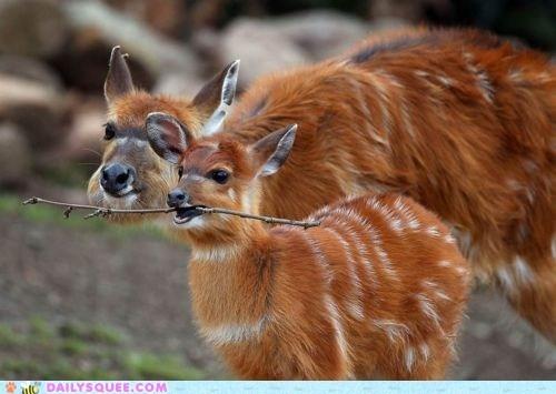 baby deer mom stick whatsit - 6031955456