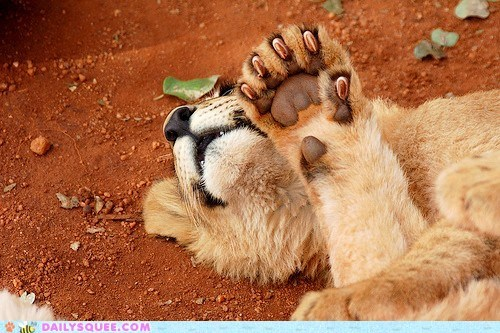claws,cub,dirt,ground,lion,nap,paw,sleep
