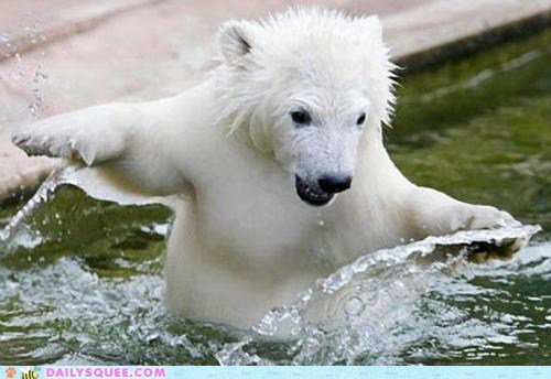 cold,polar bear,swim,water