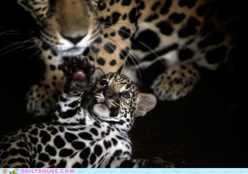 cub,feet,leopard,mom,toes