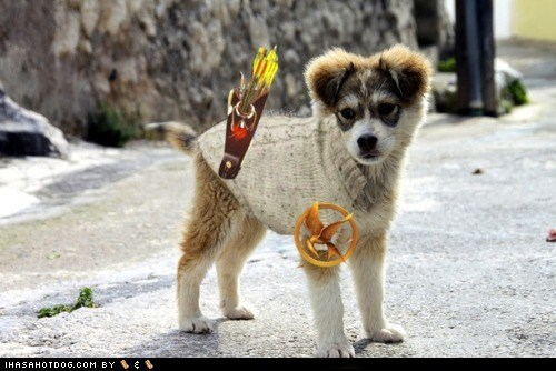 dogs hunger games puppy - 6032364032