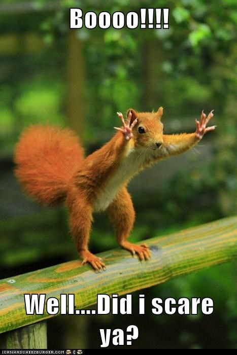 boo cute red squirrel scare squirell trying well - 6032641536