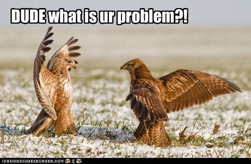 angry,birds,buzzards,dude,problem,wtf