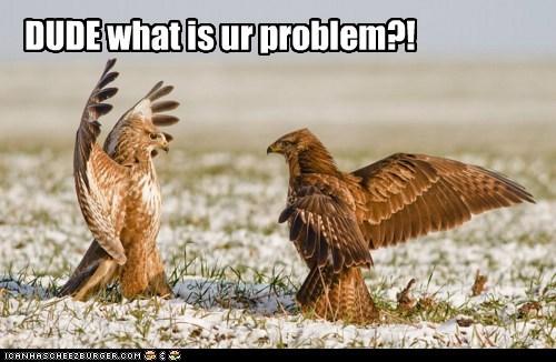 angry birds buzzards dude problem wtf - 6032673280