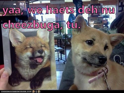 Cheezburger Image 6033494528