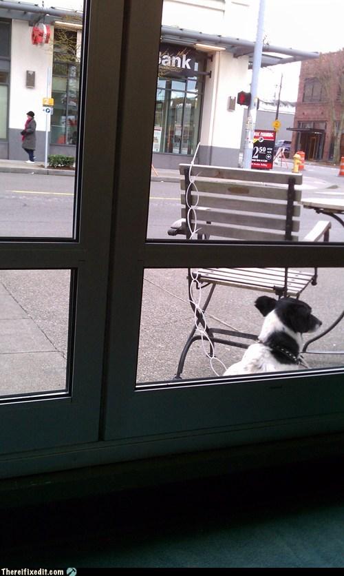 chair dogs leash