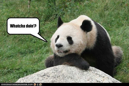 ask,bored,friend,lie,panda,sit,whatcha doin