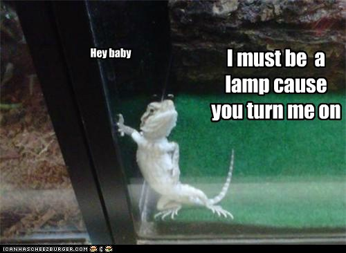 best of the week,Hall of Fame,hey baby,lamp,lizard,pickup lines,posing,suavé,turn on