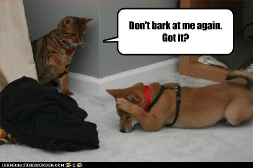again bark caption cat Cats dogs dont me scolding warning - 6035054080