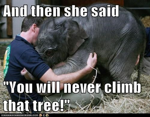 baby bully climb cry elephant jerk kid mom tears tree