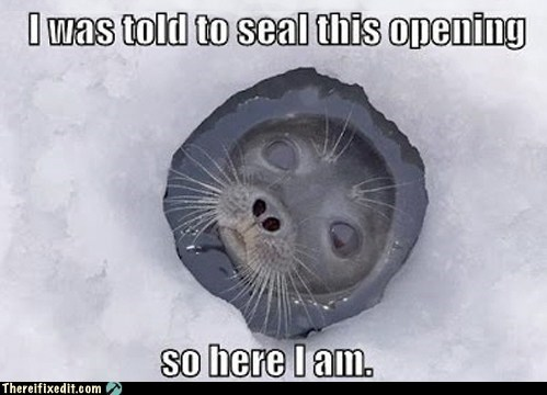 frozen,hole,ice,seal,snow
