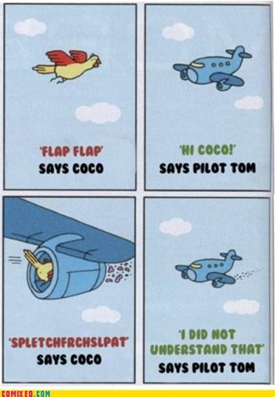 best of week bird childrens book Memes plane the internets - 6035403008