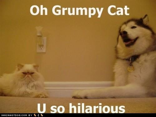 cat,dogs,grumpy,huskie