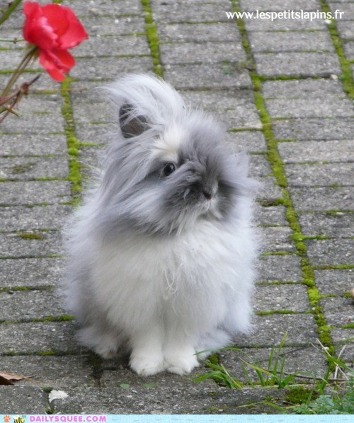 breeze bunny Fluffy furry - 6035961600