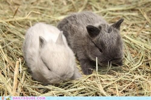 Babies,bunnies,hay