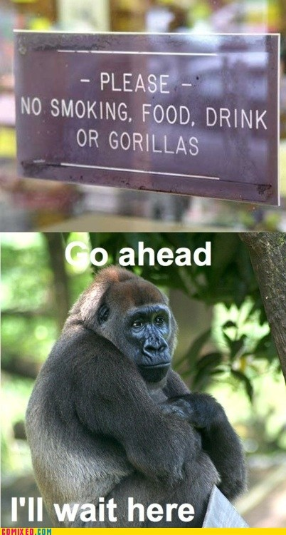 gorilla,no smoking,sign,thats-racist,the internets