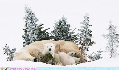 cubs polar bear snow white winter