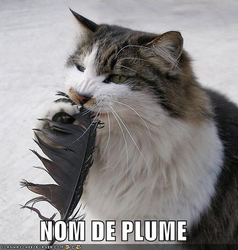 feathers,french,lolcats