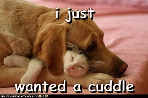best of the week cat cuddles dogs i has a hotdog - 6036569344
